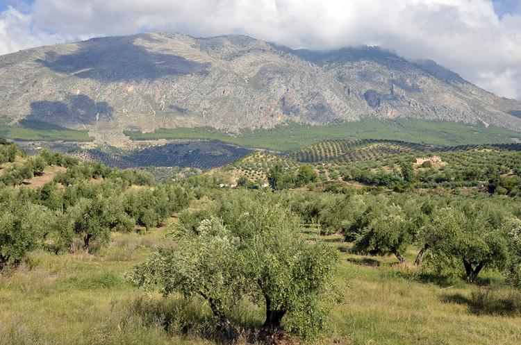 Sierra Magina y su Olivar